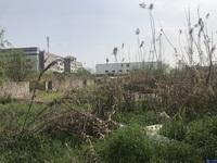 张家港市区边:有11亩商业用地、净地、