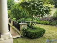 城西大自然氧吧玫瑰别墅,独门独院独栋,环境优美,高端大气,身份的象征,看房随时