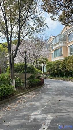 绿中海,245平,豪华装修,东边套,位置好,仅售910万!!!