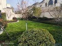 绿城玫瑰园 法式建筑唯美社区 封闭式物业管理 尽享奢华 邀您品鉴