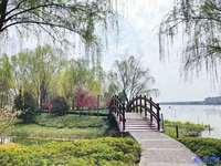 鹿鸣九里、湖景洋房、不用推开窗就可以看到湖、临河羡景不如择湖而居