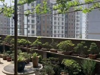 泰和苑电梯房好楼层精装修保养好 送露天阳台50平米 朝阳小学和葛江中学 学籍好用