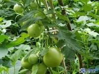 裕元可用 光大花园98平155万 花园30平 看房方便