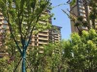 江南境秀4房超正房型 南北通透 位置佳 黄金楼层 随时看房